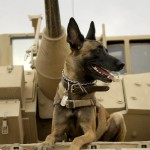 'Max' Arrives In Theaters